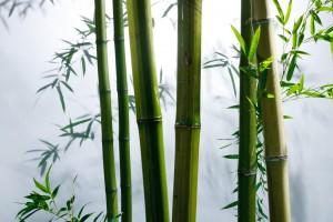 Zhejiang Xinzhou_Bamboo Plant CREDIT Yicai Global-min