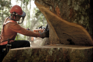 Amata uses satellite imagery to identify and select which trees can be cut down with the smallest possible impact, and barcode-labels the logs to inform buyers about the wood's precise initial location. - Credits: Amata