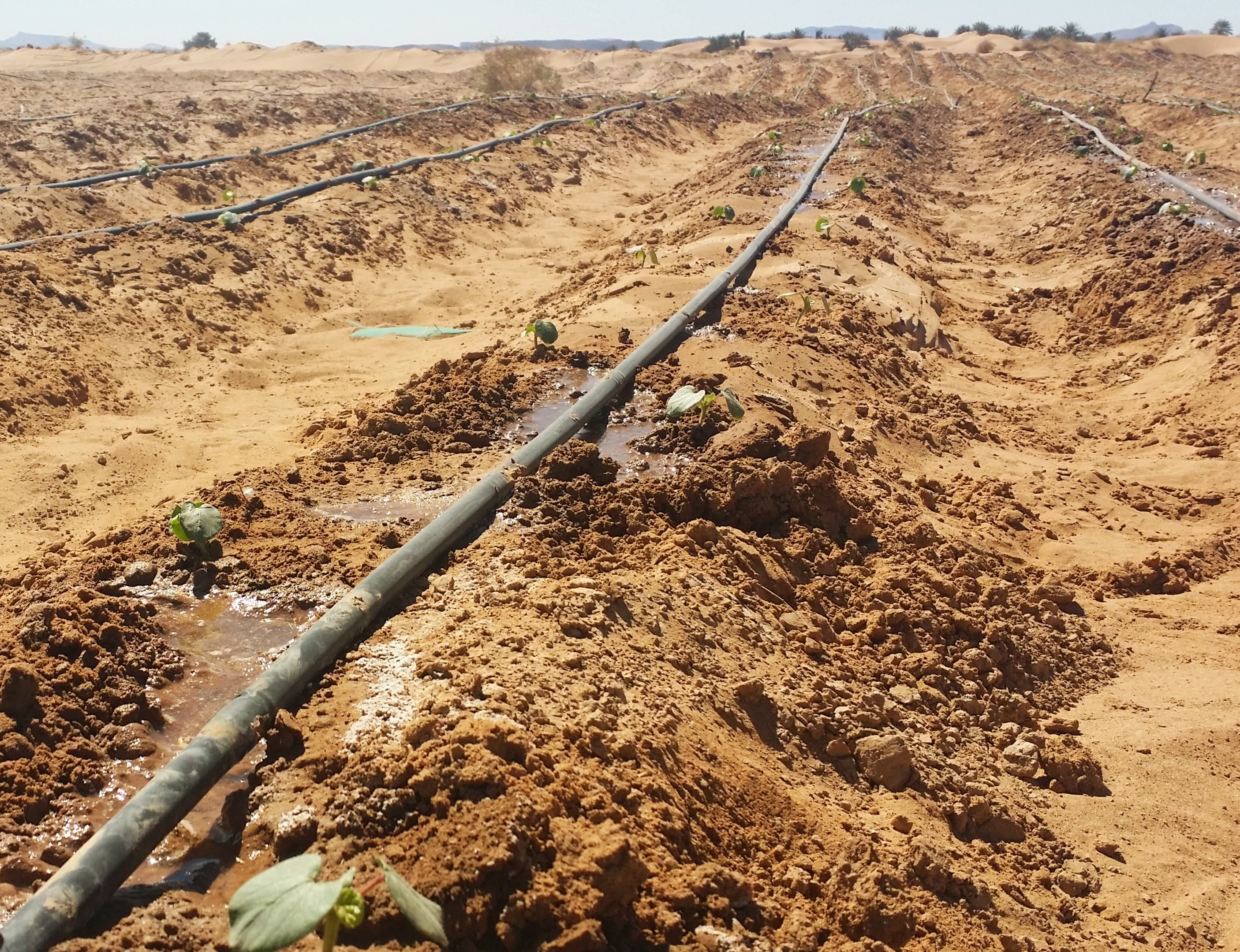 Morocco's irrigation revolution