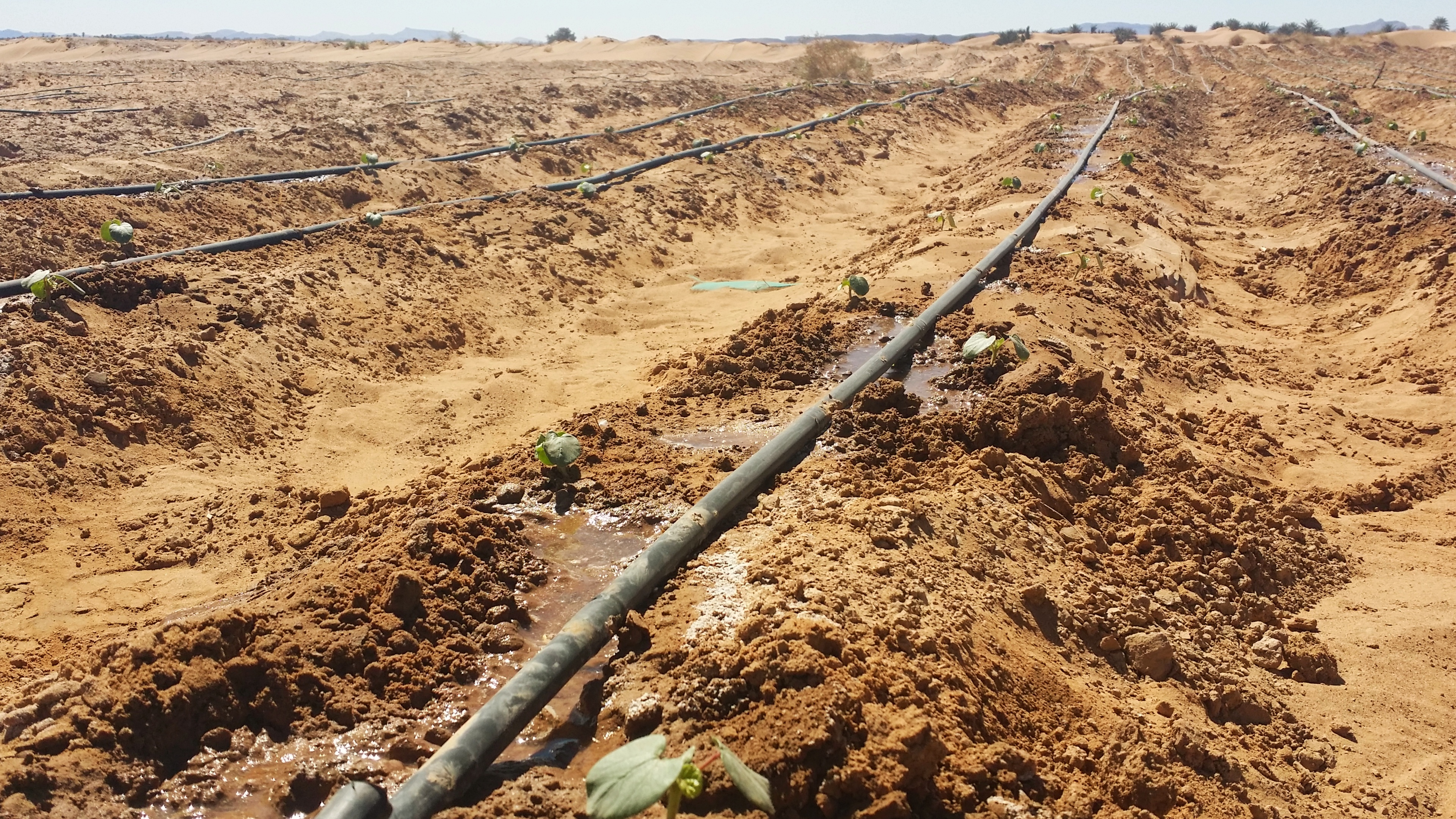Souss-Massa was the first region in Morocco and northern Africa to use weather station technology for irrigation - Credits: Sabrina Belhouari