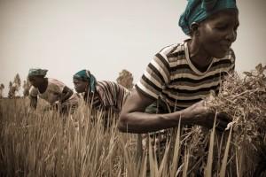 Éléphant Vert has four subsidiaries in West Africa: in Mali, Côte d'Ivoire, Kenya and Senegal - Credits: K. Nemmaoui